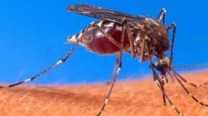 комар6
